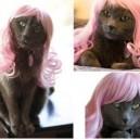 Kitty Minaj