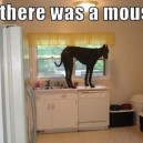 There was a mouse…