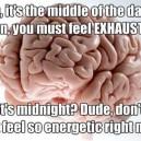 My Brain…