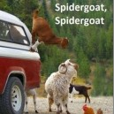 Spidergoat does whatever a spidergoat does!
