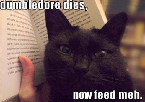 Spoiler Cat