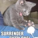 Surrender Fuzzy One!