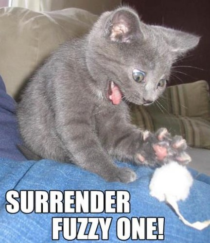 Surrender Fuzzy One!