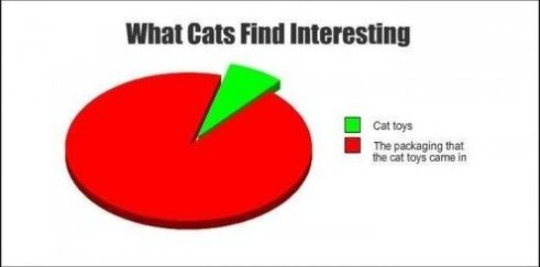 What Cats Find Interesting