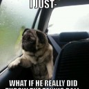 Dog Full of Questions