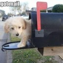 You Got Cute Mail!
