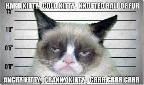 Badass Kitten