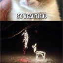Best grumpy cat pictures