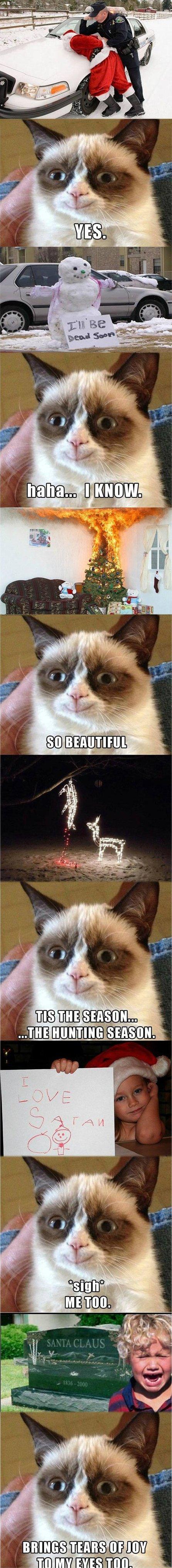 Best grumpy cat pictures