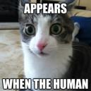 Clarity Cat