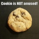 Cookie is not amused