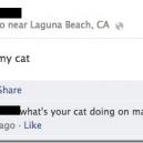 Curiosity killed my cat