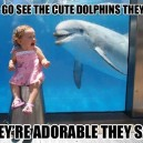 Cute dolphins