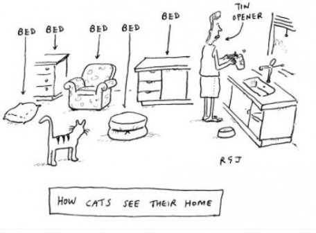 How cats see their home