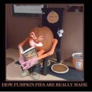 How Pumpkin Pies are really made