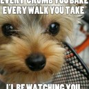 I'll always be watching you