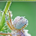 Insects After The Rain