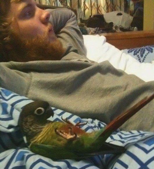 Like master like parrot
