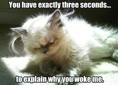 A Typical Morning…