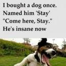 Naming my dog
