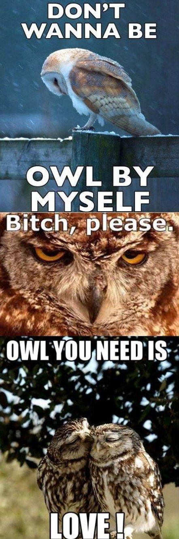 Owl by myself