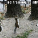 Secret Squirrel Facility