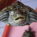 Surprised turtle