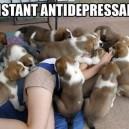 The best antidepressant