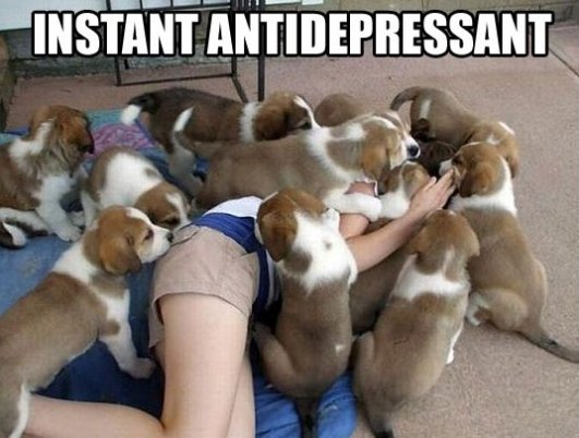 The best antidepressant