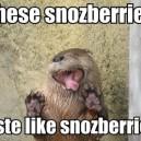 These Snozberries
