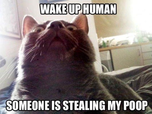 Wake Up Human