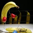 What bananas do at night