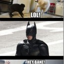 Where Batman learned his fighting moves from