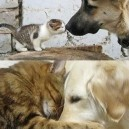 Who says cats and dogs cant get along