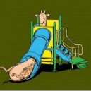 Why Giraffe's don't like Playgrounds