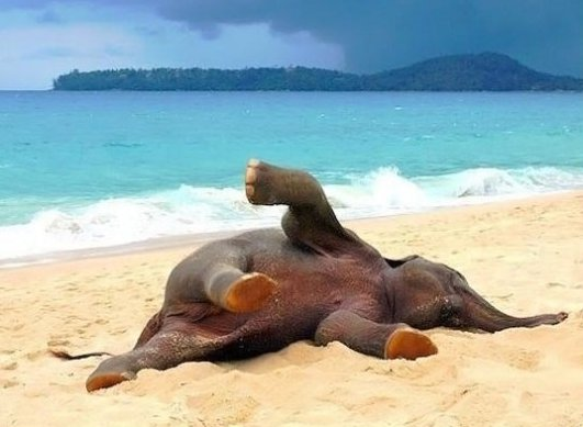 Baby elephant playing in the beach for the first time