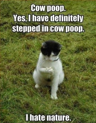Cat and cow poop