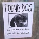 Found your dog