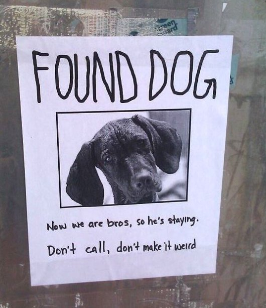 Found your dog