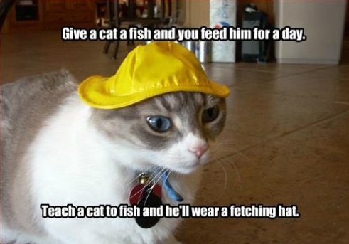 Give a cat a fish…