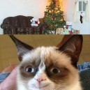 Grumpy cat finally happy