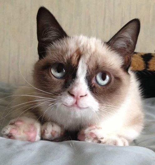 Grumpy cat smiles!