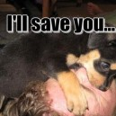 I Will Save You!