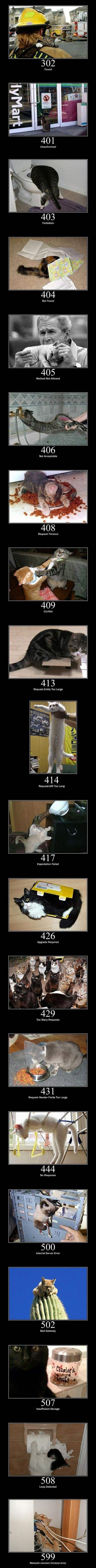 Internet errors as depicted by cats