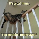 It s a cat thing