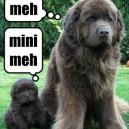 Mini Meh
