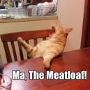 Needy Cat