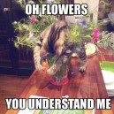 Oh flowers!