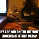 Overly Attached Kitty