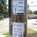 Parrot Lost